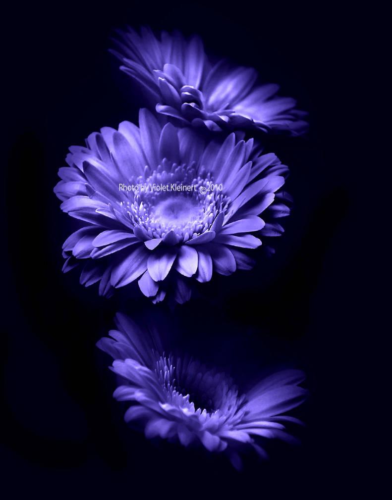 Moonlight Flowers By Violet Kleinert