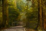 Enchanted Forest by Violet-Kleinert