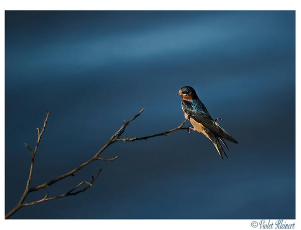A Little Birdie... by Violet-Kleinert