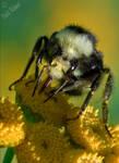 Cheeky Bumblebee