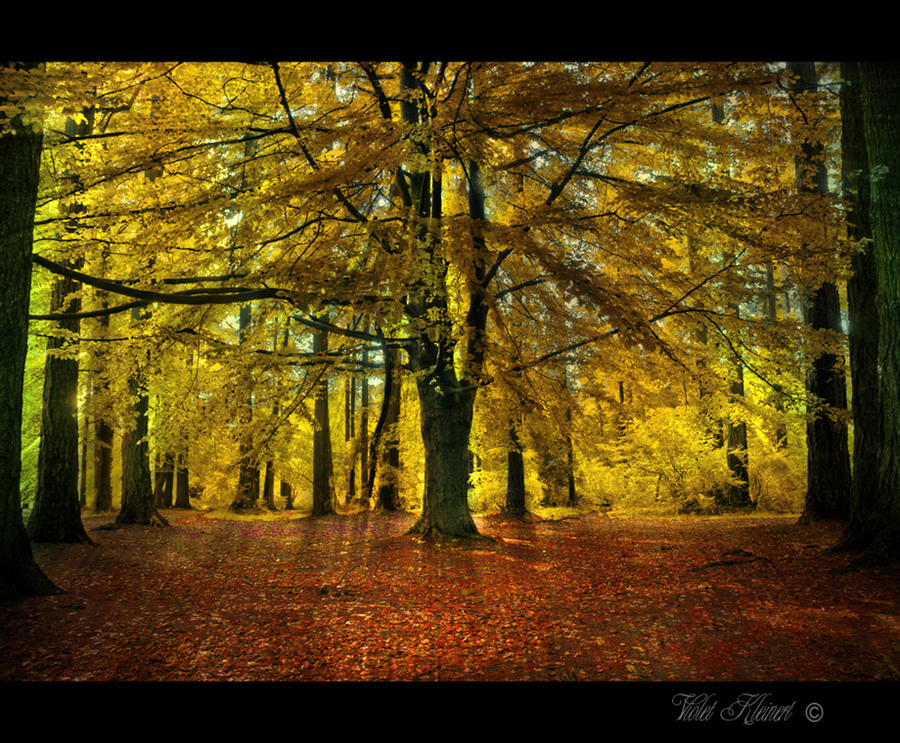 Autumn Light by Violet-Kleinert