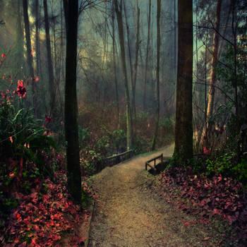 Whispering Forest by Violet-Kleinert