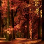 Autumn's Golden Light