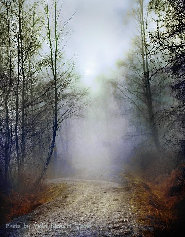 Veiled by Violet-Kleinert