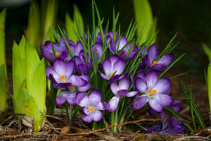 Happy Spring by Violet-Kleinert
