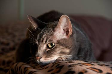 Meow by Violet-Kleinert