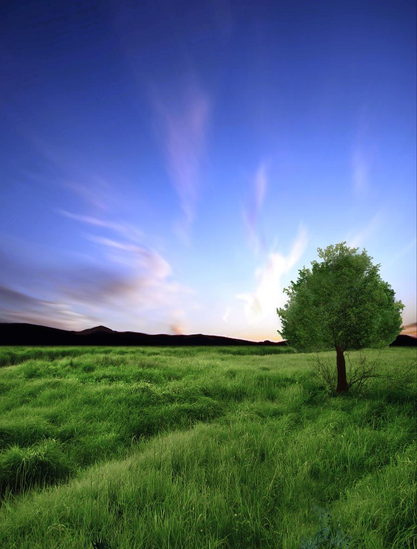 Tree by Violet-Kleinert