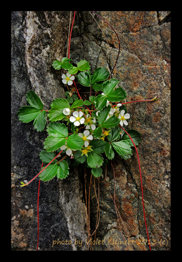 Nature's Gift by Violet-Kleinert