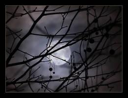 Winter Moon by Violet-Kleinert
