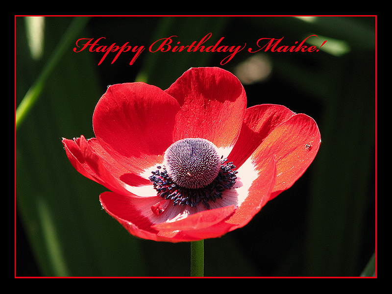 happy birthday poems for grandma. I am happy! irthday poems for
