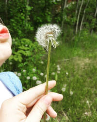 one wish per dandillion! by SansTheLazyBones