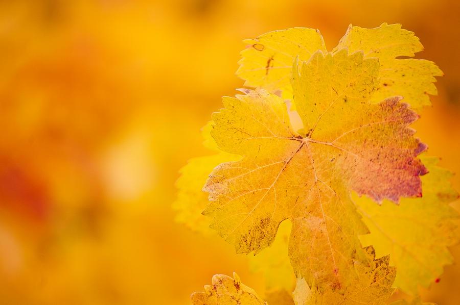 Autumnal 2 by Mimilotka