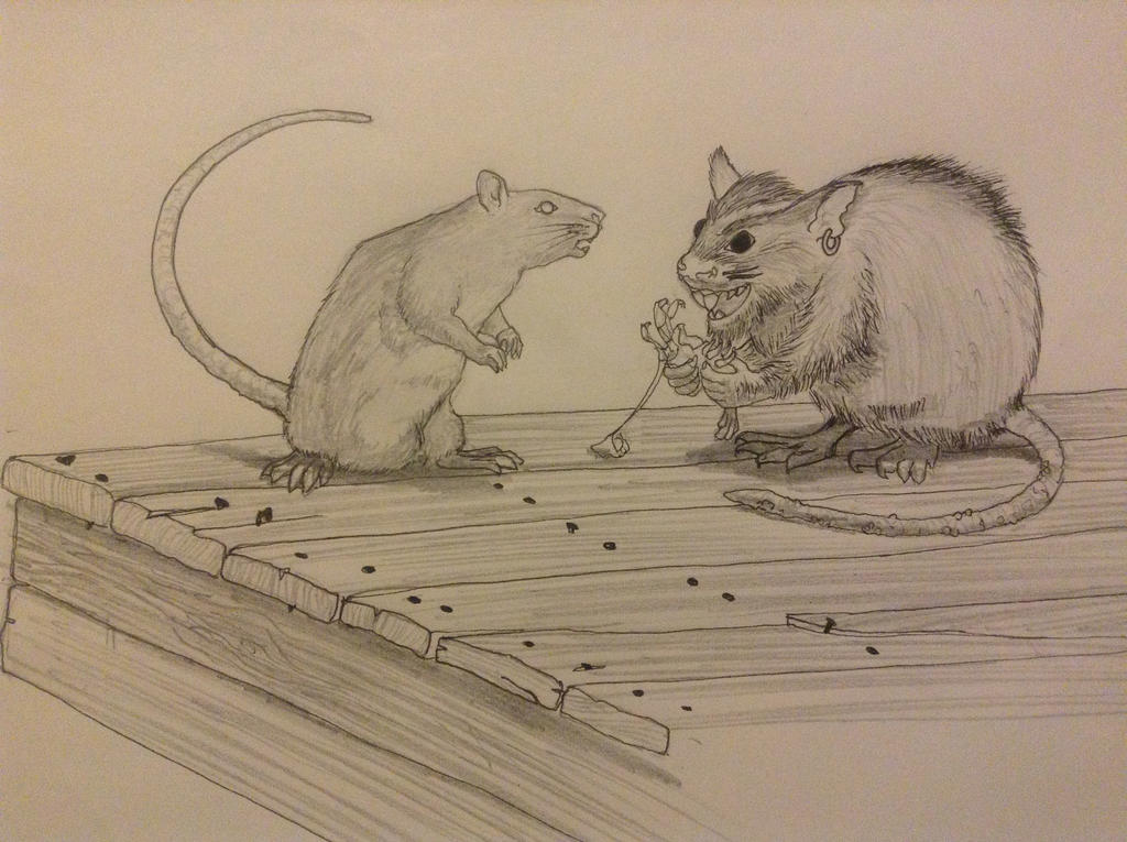 Rat thing