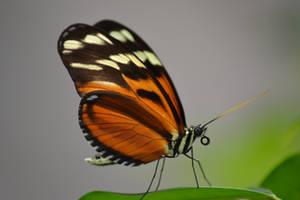Butterfly 6 by ArnaudInTheSky