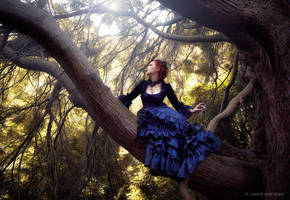 Into the trees by Annie-Bertram