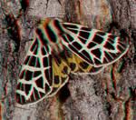 Moth on a Tree