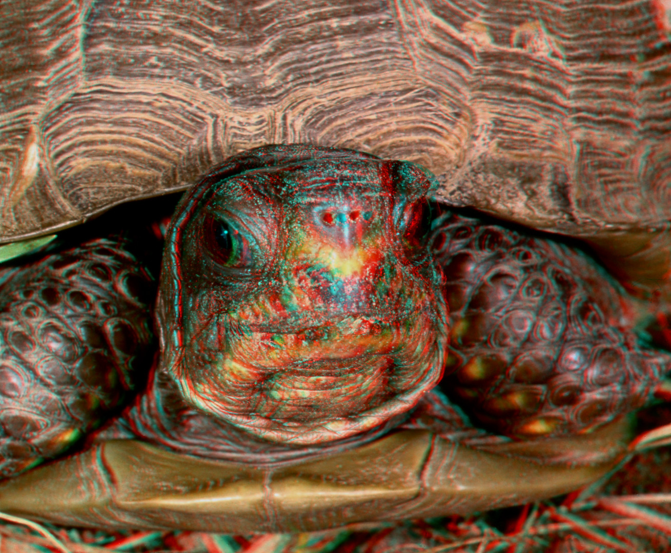 Tortoise Smile by DDDPhoto