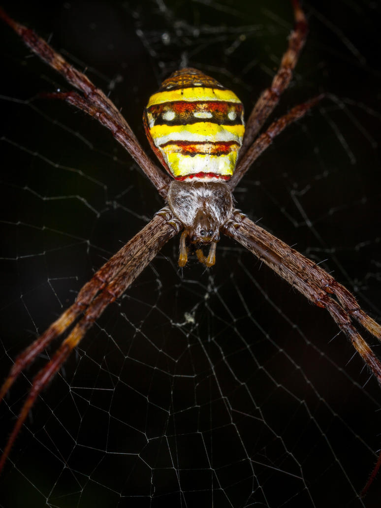 St. Andrews Cross Spider by strictfunctor