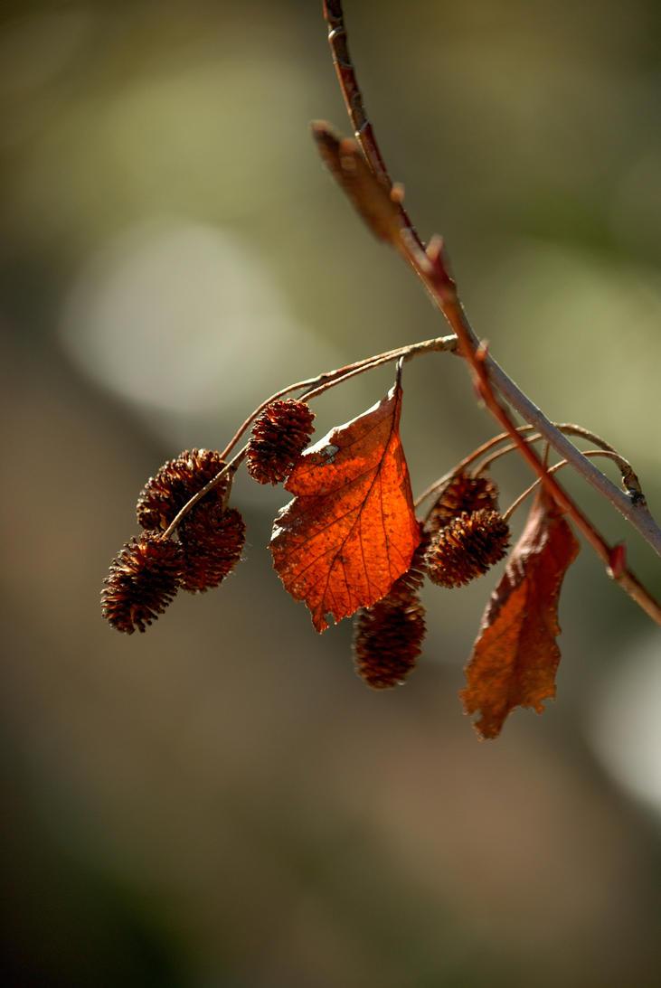Auburn Leaf by darkguitar3000