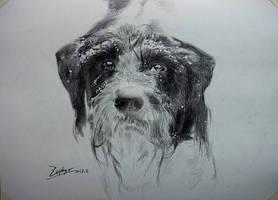animal - doggy