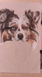 Aussie Pet Portrait WIP #5