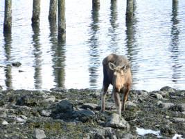 more moose, less beach by alexvontolmacsy