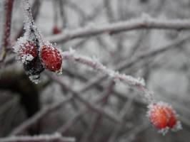 Winterschlaf by SunsetInTheDarkness