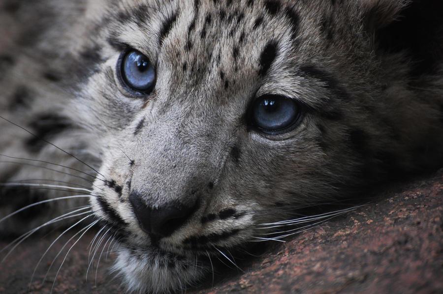 sneleopard_by_idur-d2z04bm.jpg