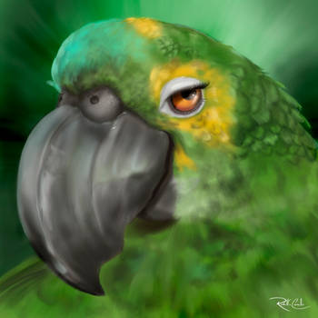 Papagaio by rodolfocarvalho