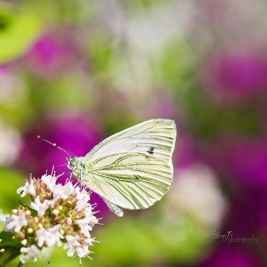 Colorful garden by StineJ