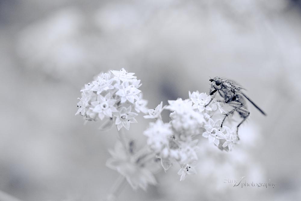 A fly by StineJ