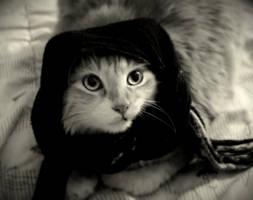 Gato Afgano by kopurpura