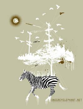 The Zebra Dances