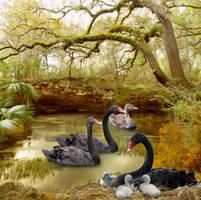 Crystalline Pond-by-GothLyllyOn-AugustMMXVII by GothLyllyOn