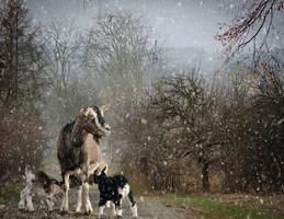 Snowy December-by-GothLyllyOn-MMXVII by GothLyllyOn