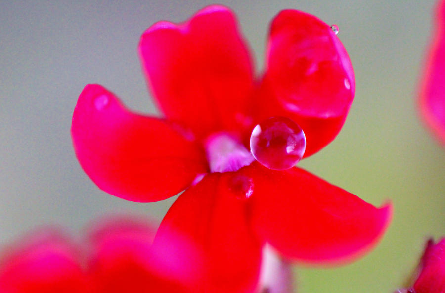 red with water drop. by mikestevenson1955