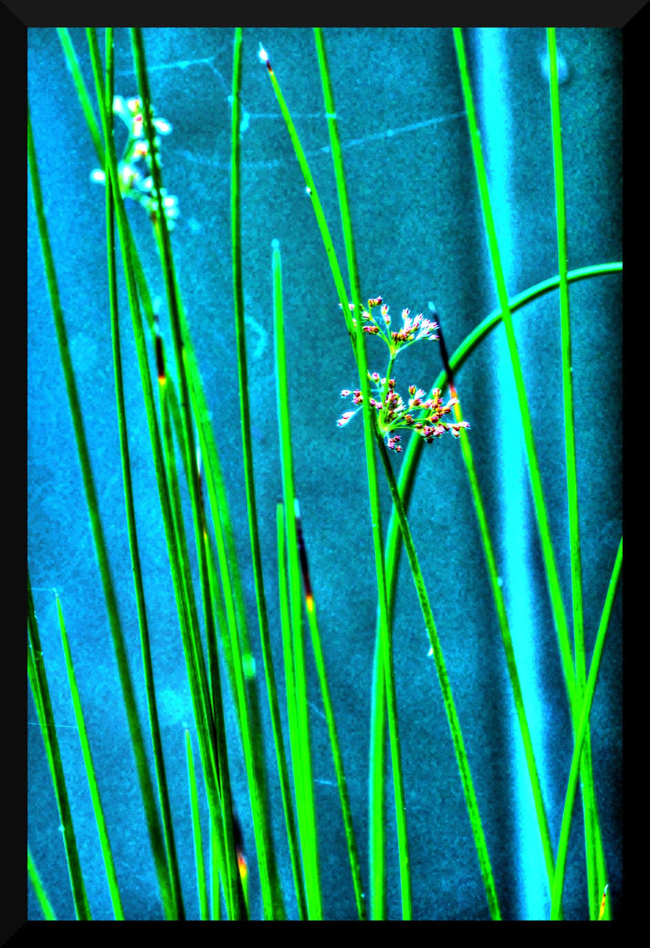 blue grass by mikestevenson1955
