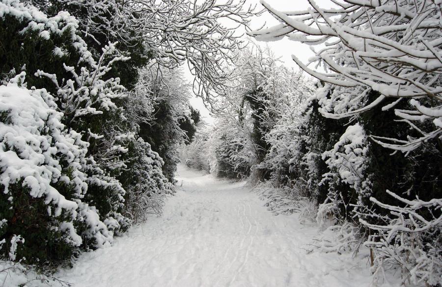 Snow by MissC23