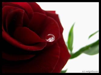 Precious by Den-Lilla-Rose