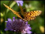 . Le Papillon .