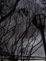 broken lantern by AutumnLeong
