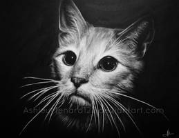 Cat Charcoal black and white by ashleymenard122