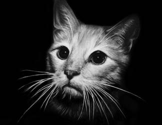 Cat Charcoal black and white PRINT by ashleymenard122
