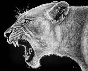 Lioness White Charcoal Portrait by ashleymenard122