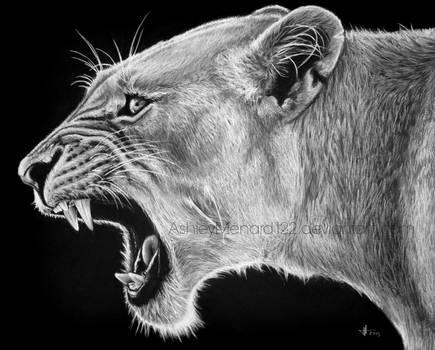 Lioness White Charcoal Portrait