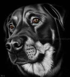 Dog Portrait White Charcoal