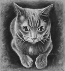 Kitty White Charcoal Portrait