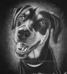 Rottweiler White Charcoal Portrait