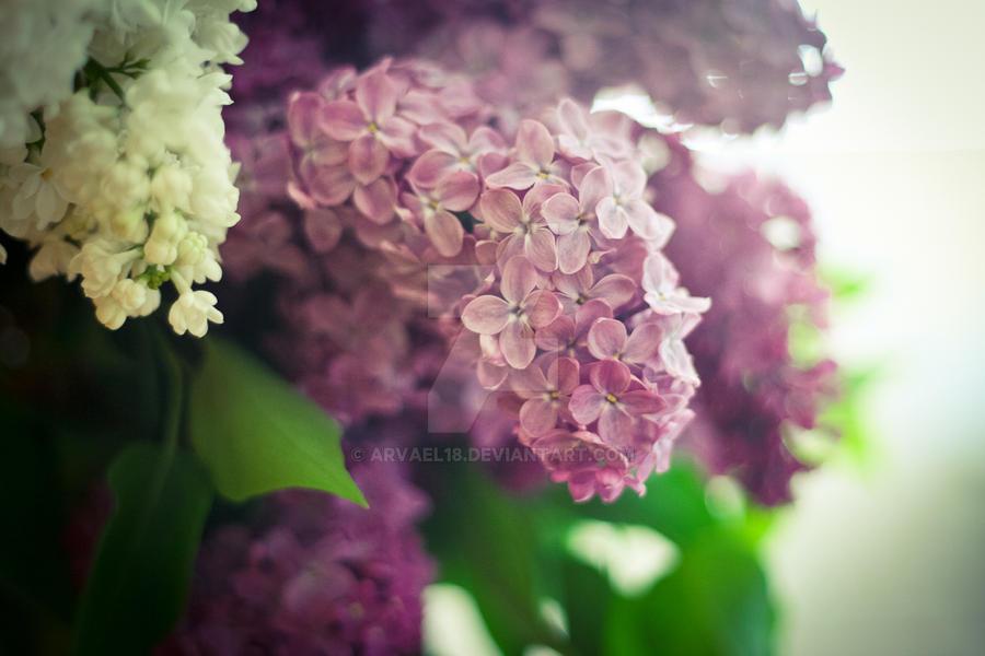 Violet wonder by arvael18