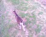 Wild animals 3
